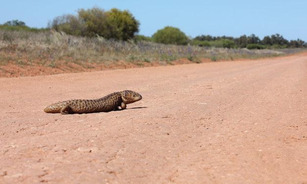 Touring Australia