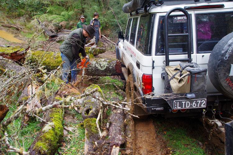 ルークは、トラックをブロックしていた別のツリーをクリアします